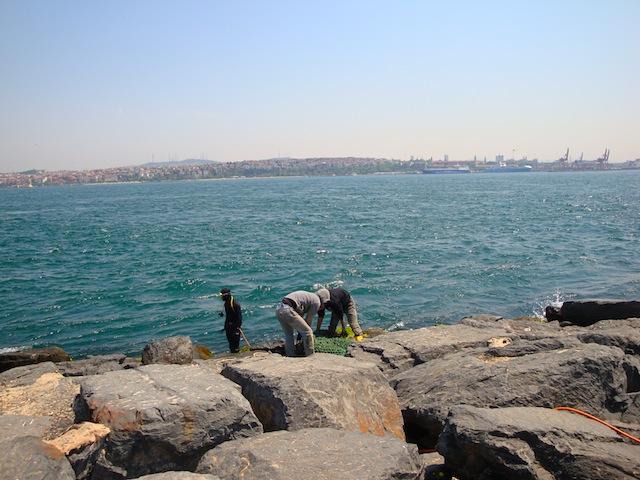 blog golly&bossy - istanbul - mušule