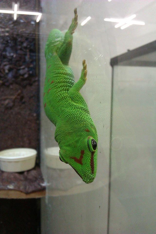 blog golly&bossy - AkTer fest - ribe i zmije