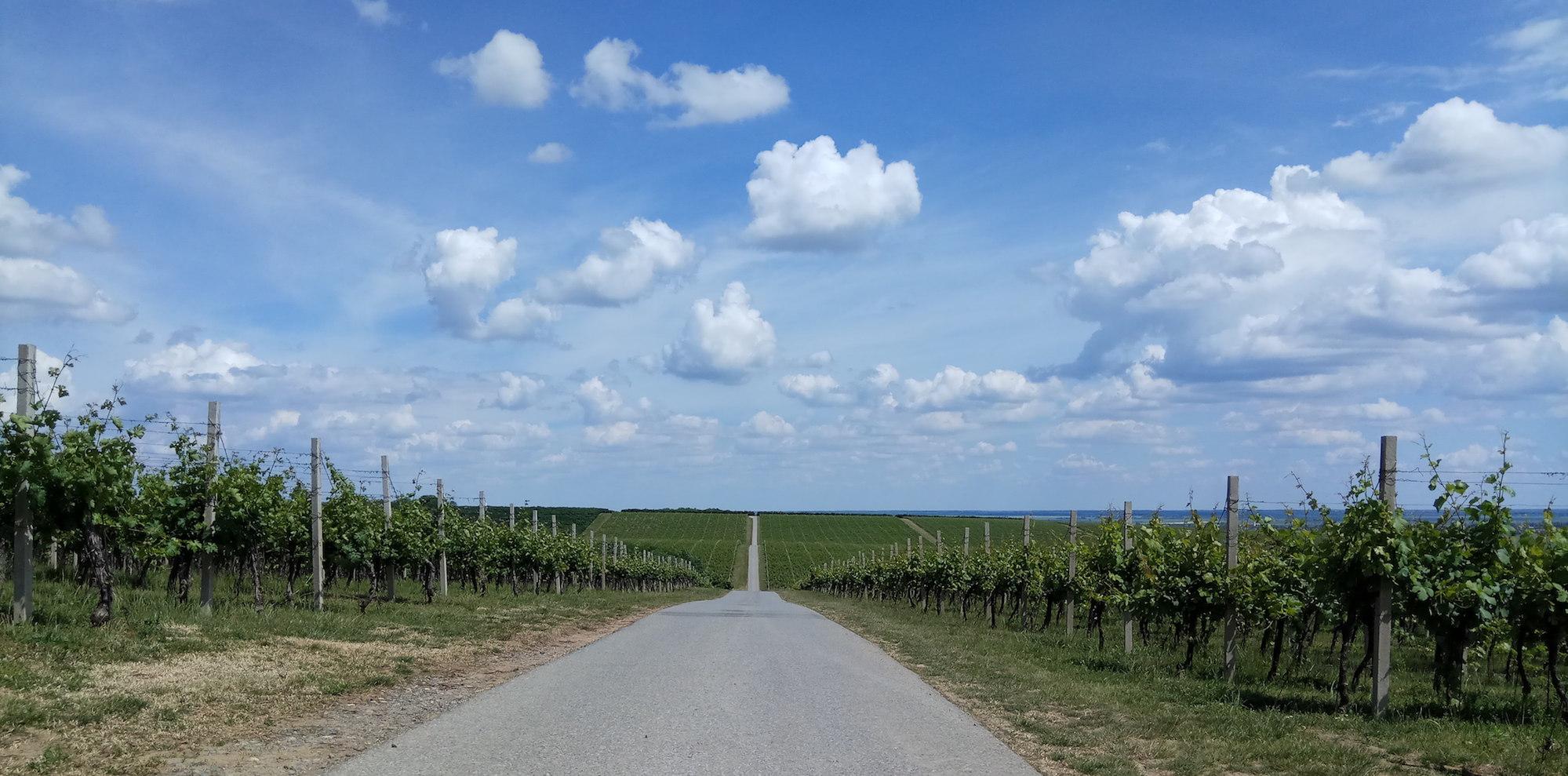 blog golly&bossy - baranjski vinogradi